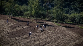 farm-5332