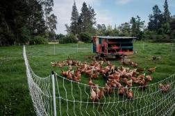 farm-7855