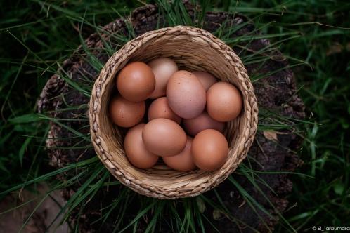 huevos-1518